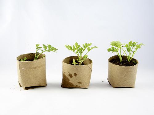 Seed Starter Pots