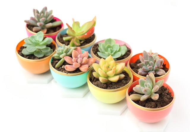 Mini Spring Succulent Planters