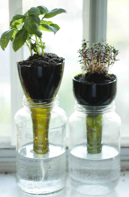 Self-Watering Wine Bottle Planters