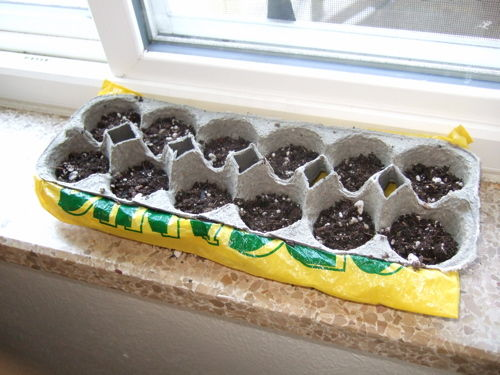 Turn an Egg Carton into a Seed Starter