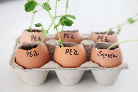 Make eggshell seedling pots