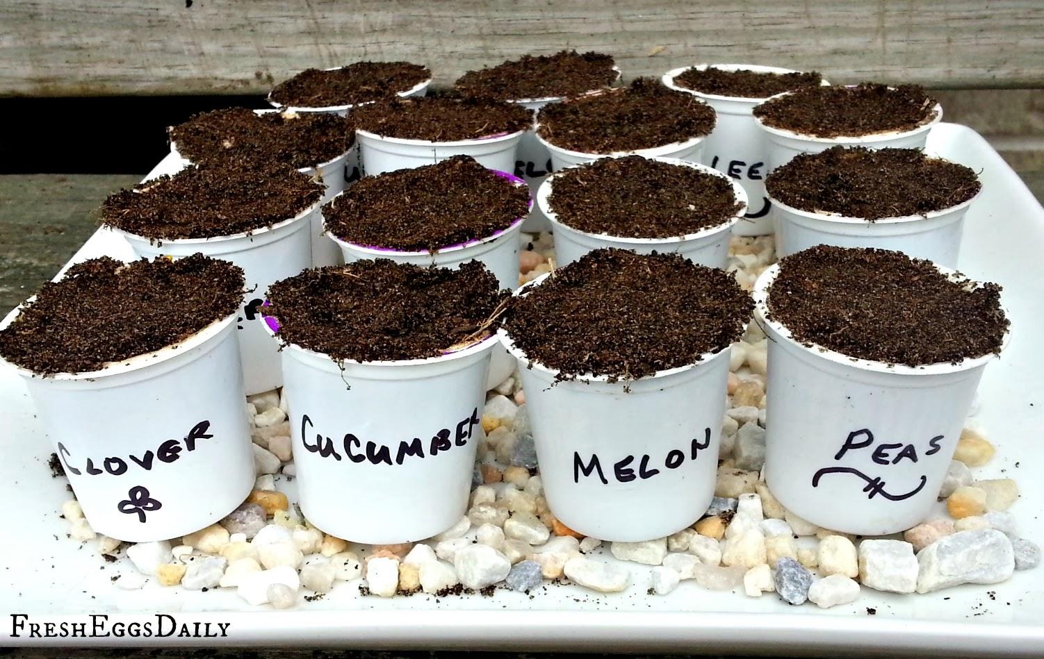 Reuse K-Cups to Start Your Garden Seeds