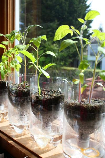 Self-Watering Seed Starter Pots