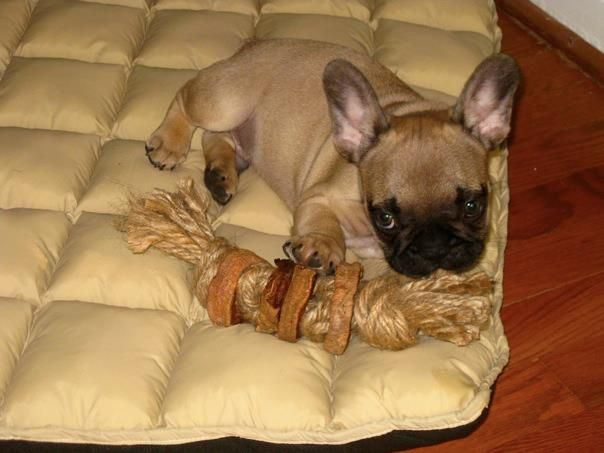 An Indestructible Chew Toy Made from Rope and Dried Sweet Potatoes