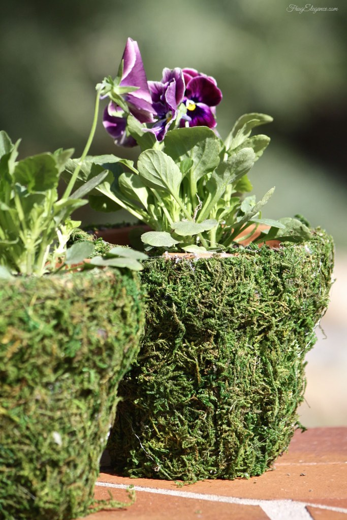 Dress up a terracotta pot with a coating of living moss