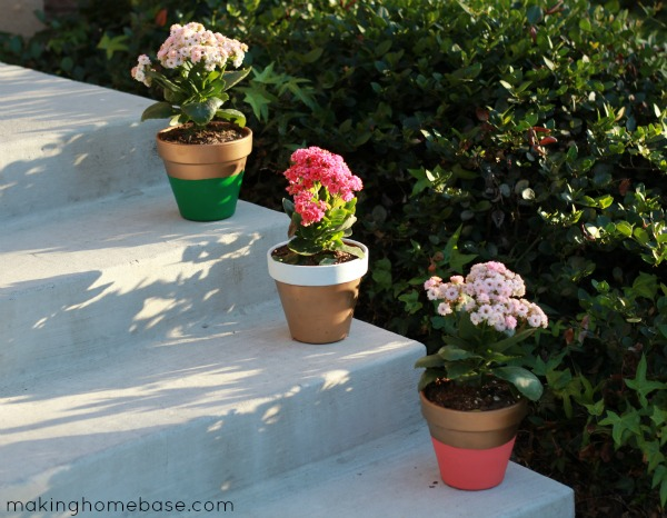 Paint flower pots with different colors
