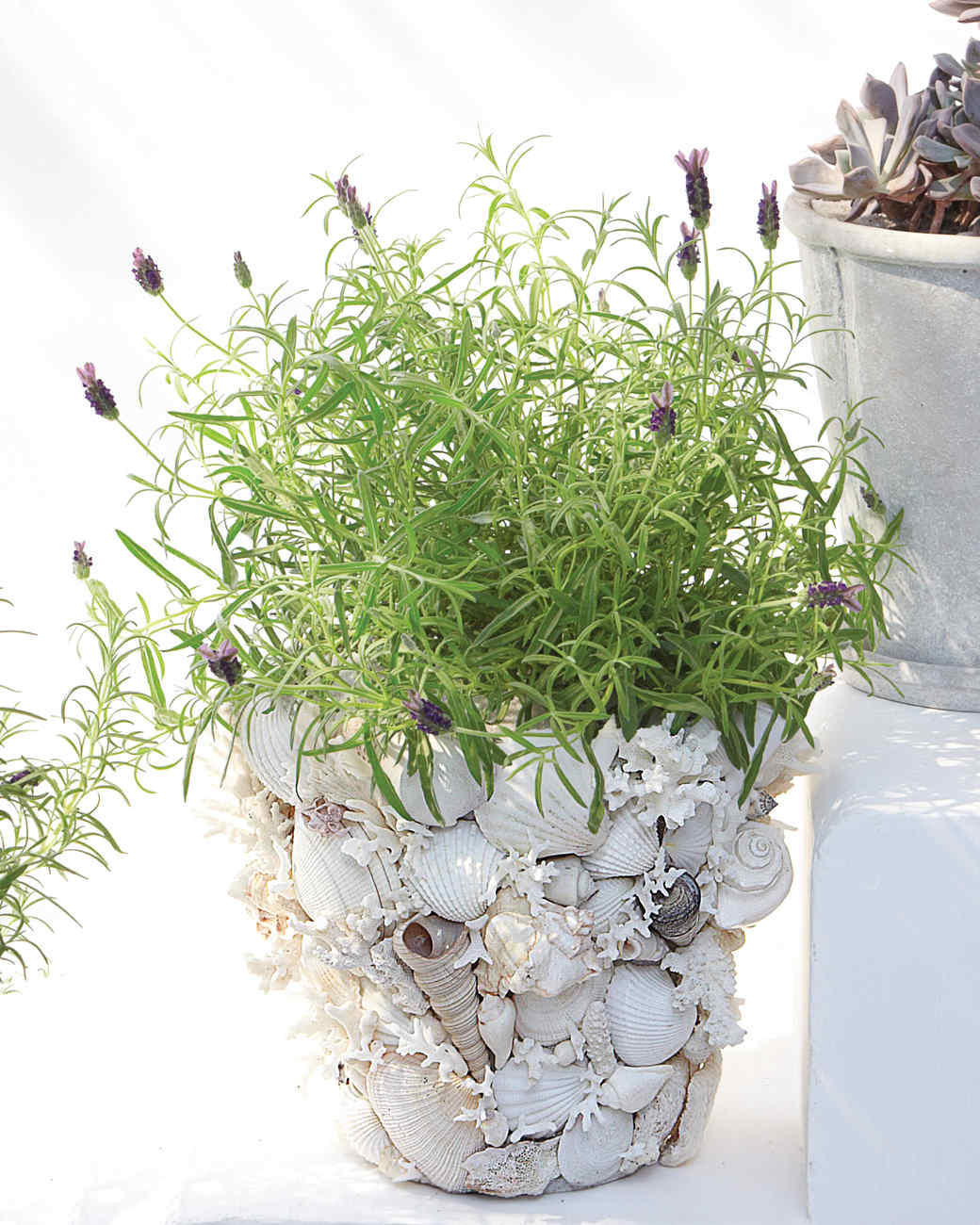 Use Shells to Decorate Flower Pots