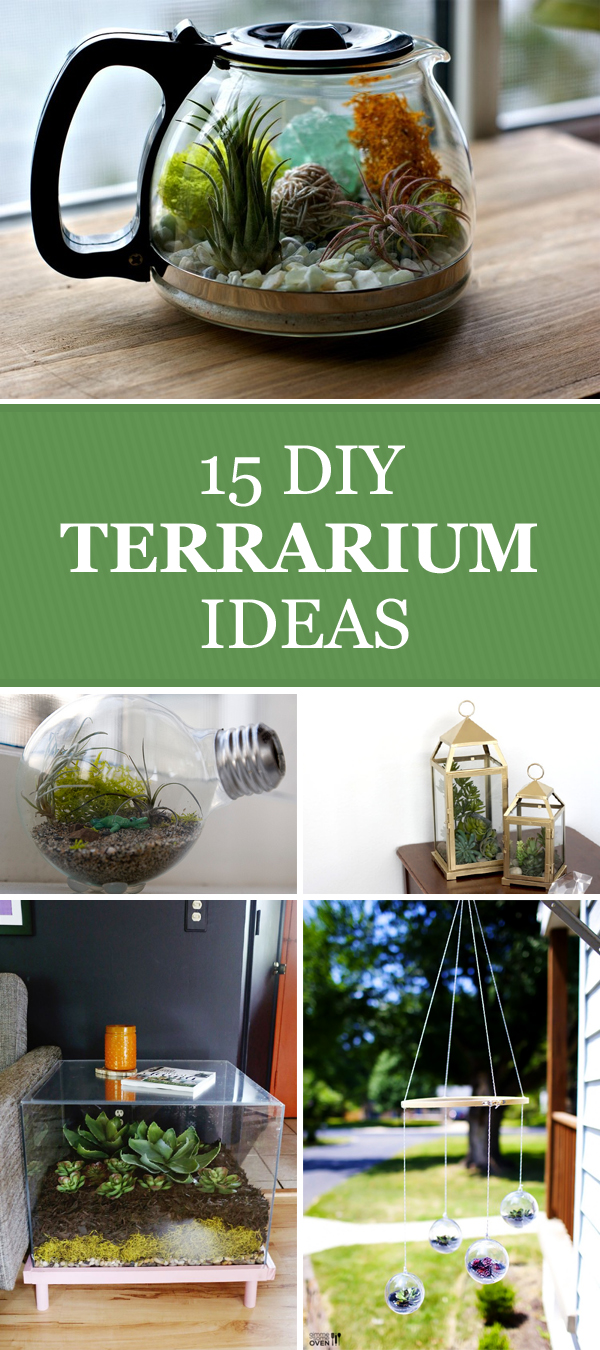 DIY Terrarium Ideas to Add Some Green to Your Decor