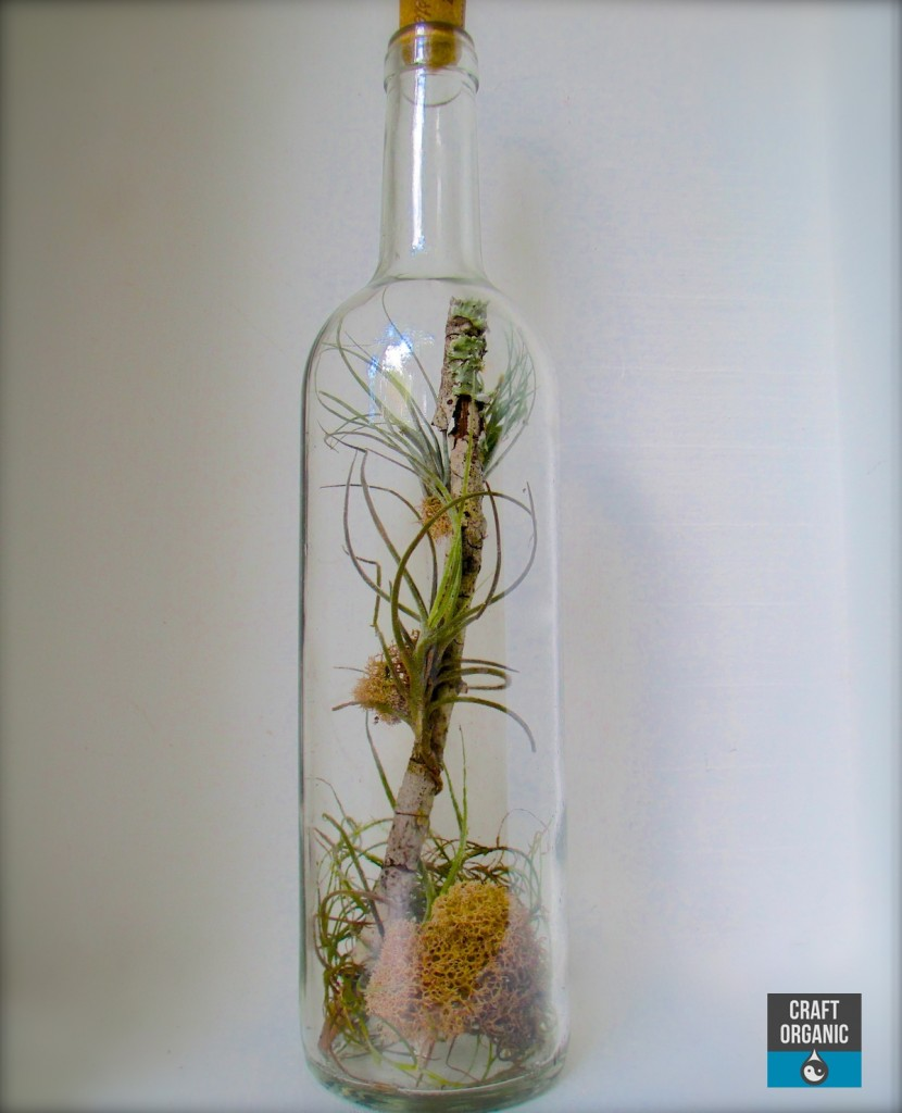 Turn a Wine Bottle into a Terrarium
