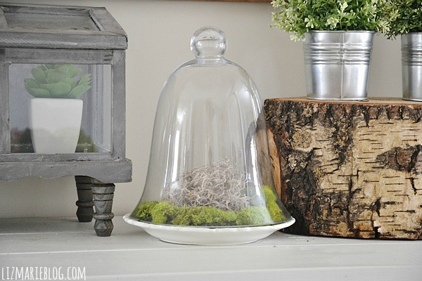 Glass Cloche Moss Terrarium