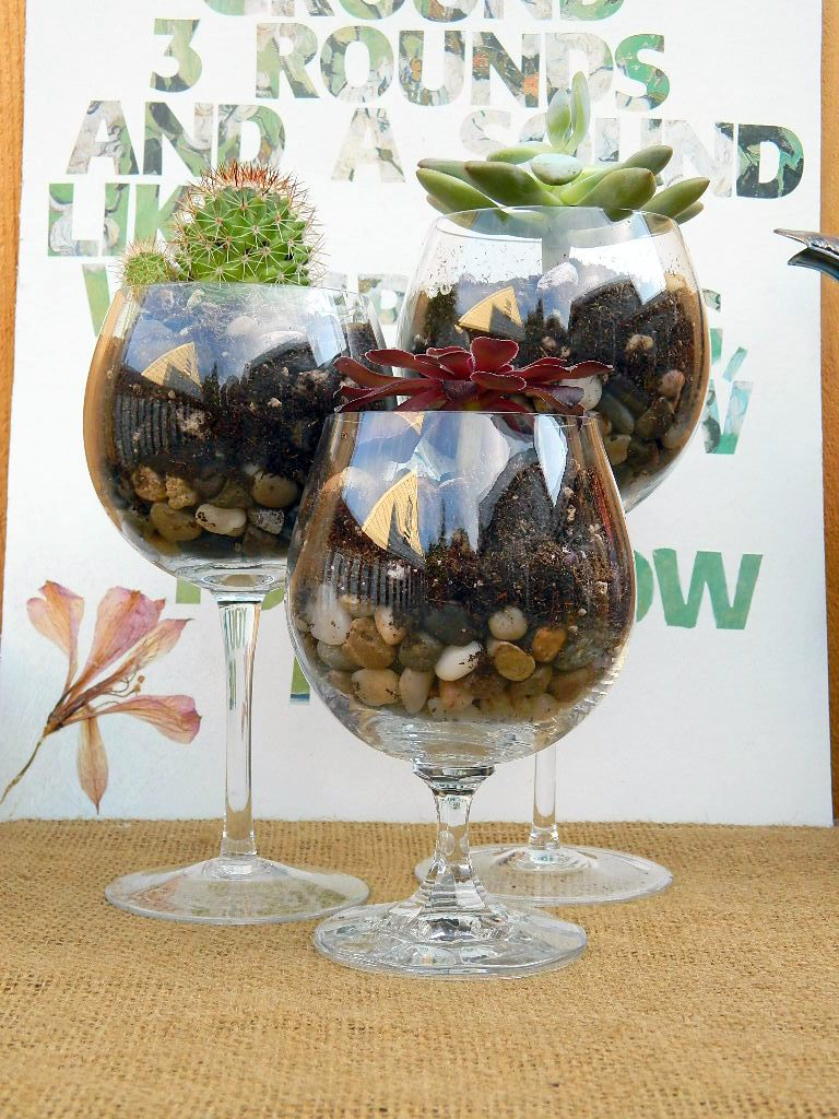 wine glass terrariums