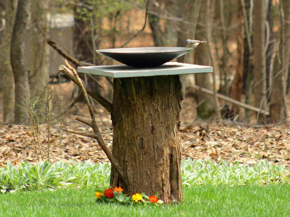 Turn a Tree Stump Into a Birdbath