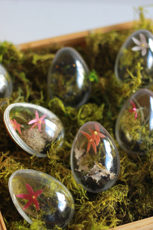 easter egg terrariums