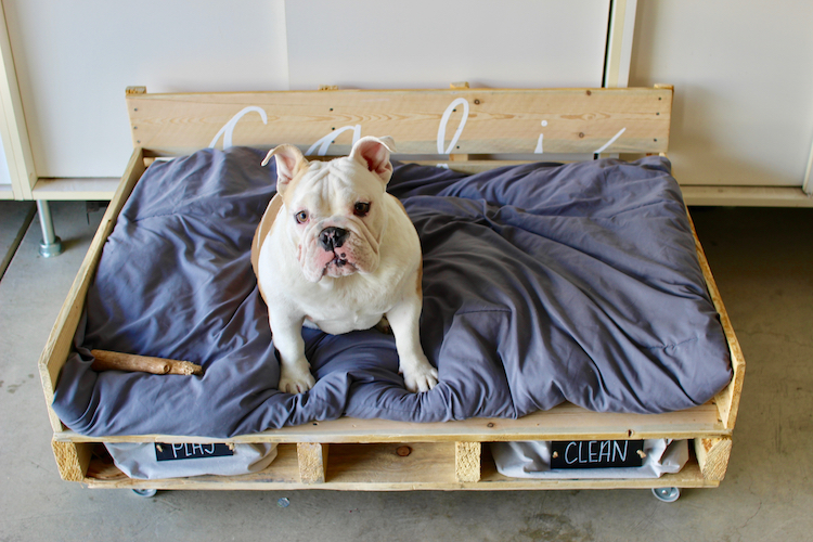 Pallet Dog Bed on Casters